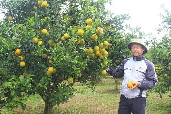 Nhiều mô hình nông nghiệp hiệu quả ở Phú Thị