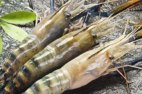 Thực phẩm Sao Ta đạt gần 23 triệu USD doanh thu trong tháng 10