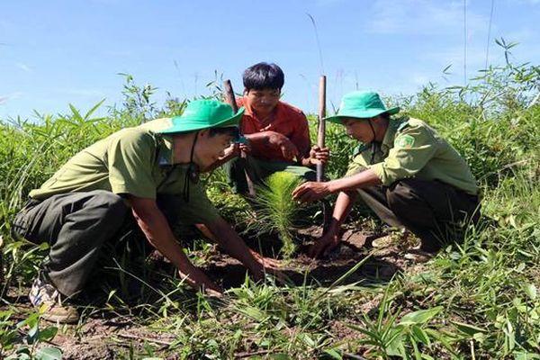 Nỗ lực nâng cao độ che phủ rừng