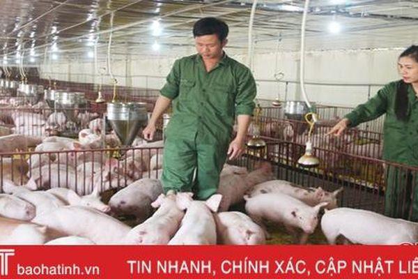 Hà Tĩnh sẽ đảm bảo nguồn cung thịt lợn dịp Tết Tân Sửu 2021