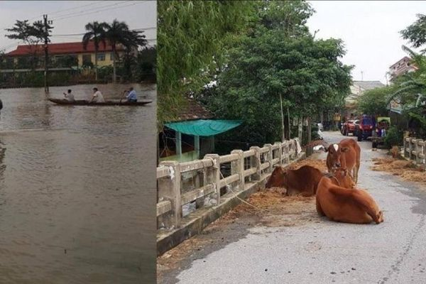 Vùng trũng Huế, Quảng Trị: Dân di chuyển bằng thuyền, bò lên cầu tránh lụt