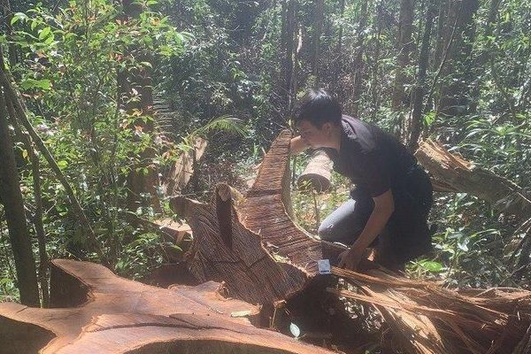 Gia Lai: Tan hoang rừng huyện Ia Grai