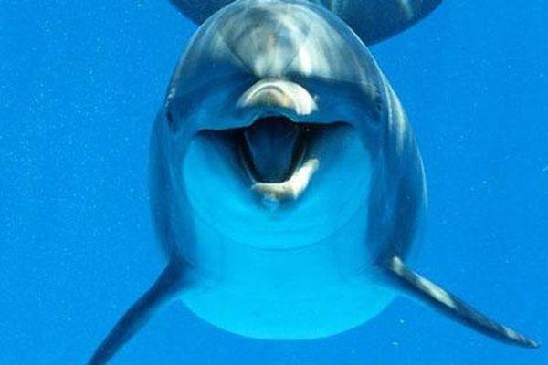 Phát hiện cá heo biết sử dụng cấu trúc câu khi giao tiếp