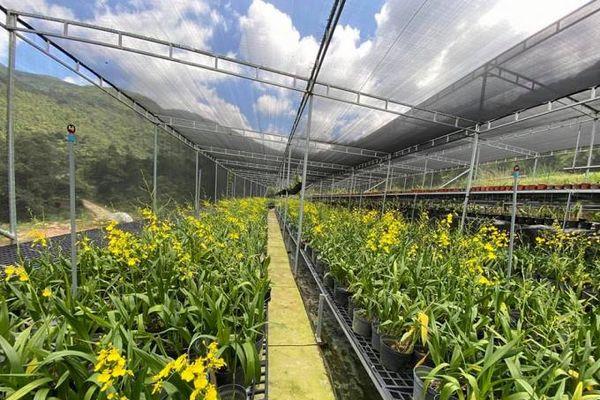 Quảng Ninh phát triển vùng trồng hoa công nghệ cao