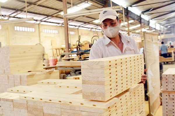 Ngành cao su: Tuân thủ Hệ thống đảm bảo gỗ hợp pháp