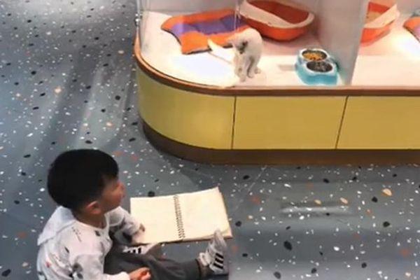 Chết cười cách cậu bé 'không có năng khiếu hội họa' muốn vẽ mèo như thật