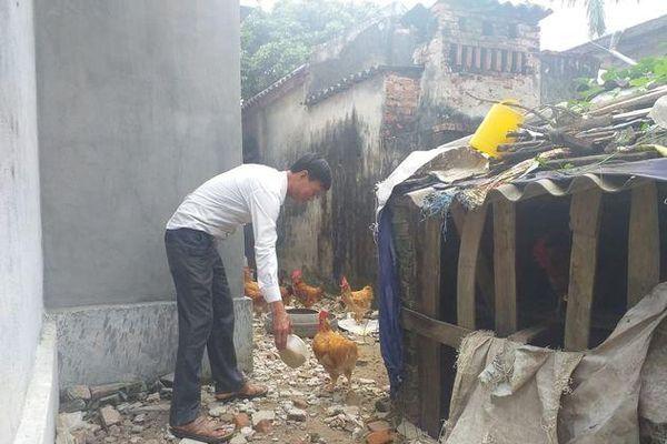 Đồng Minh (Vĩnh Bảo – Hải Phòng): Cần sớm chi trả tiền hỗ trợ thiệt hại gia cầm cho người dân