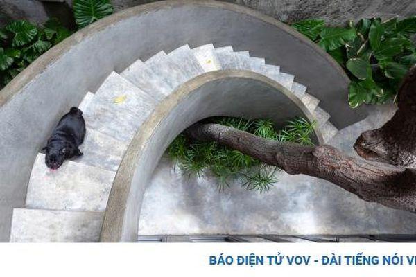 Ngôi nhà vườn xanh mướt tầm mắt tại Nghệ An