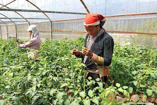 Đề xuất các vùng đặc biệt khó khăn để người lao động có thể nghỉ hưu sớm
