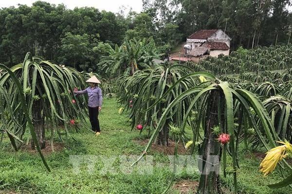 Nông sản Việt ra thị trường thế giới - Bài 1: Gia tăng hàng rào phi thuế quan