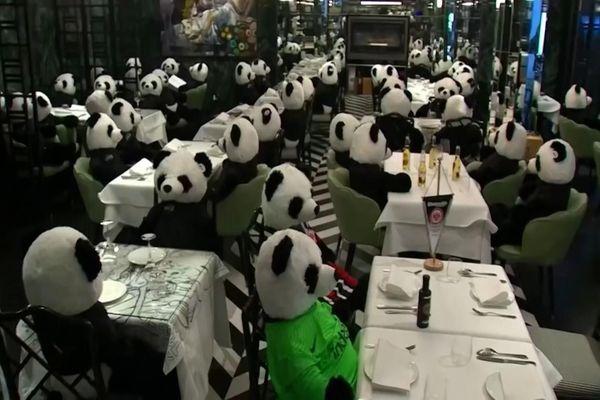 Nhà hàng thay thế khách bằng hàng trăm gấu trúc bông