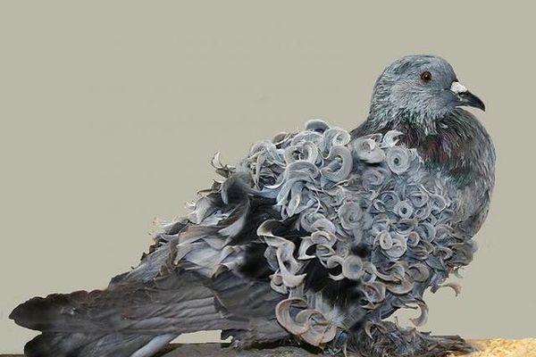 Kỳ lạ loài chim thích... đi bộ hơn là bay