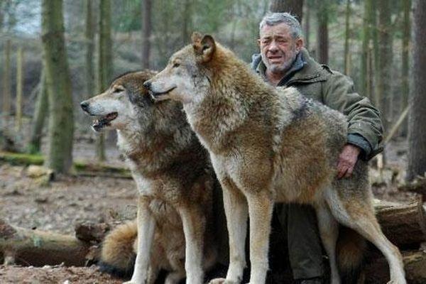 CLIP: Bầy sói tò mò rủ nhau tiếp cận đoàn làm phim và cái kết