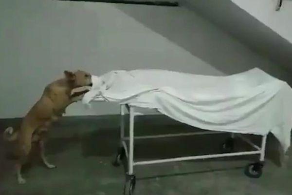 Kinh hoàng khoảnh khắc chó hoang gặm xác cô gái bị bỏ rơi trên cáng trong bệnh viện
