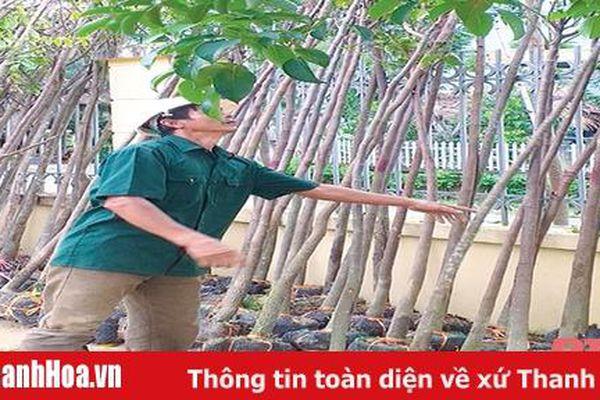 Hỗ trợ cây giống trồng cây cảnh quan gắn với phát triển du lịch sinh thái trên địa bàn huyện Thường Xuân, Bá Thước