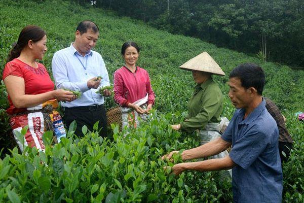 Giảm nghèo bền vững ở Bình Yên