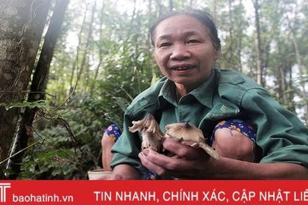 Mùa săn nấm mối ở miền núi Hà Tĩnh
