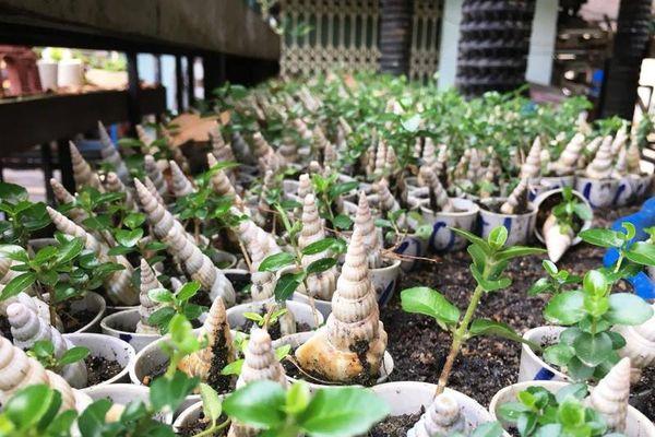Mãn nhãn bộ sưu tập bonsai mini kỷ lục thế giới của lão nông Khánh Hòa