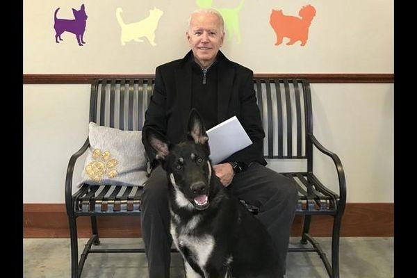 Ứng viên Tổng thống Joe Biden bị chấn thương khi chơi đùa với chó cưng