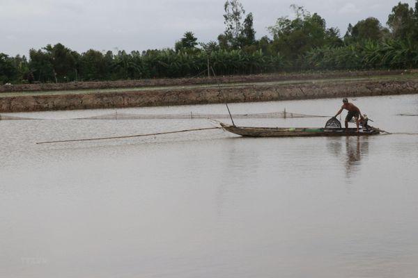 Hình ảnh cuộc sống mưu sinh nghề bắt cá đồng sông nước miền Tây