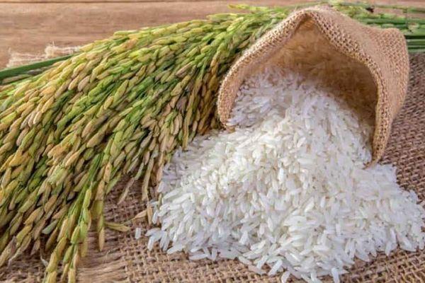 Campuchia xuất khẩu lúa gạo tăng