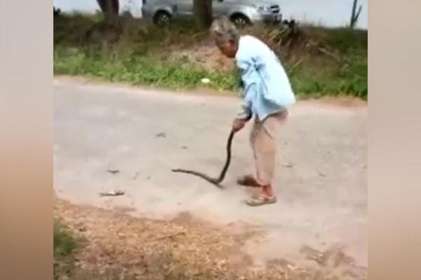 Cụ bà 74 tuổi tay không quật chết rắn giữa đường