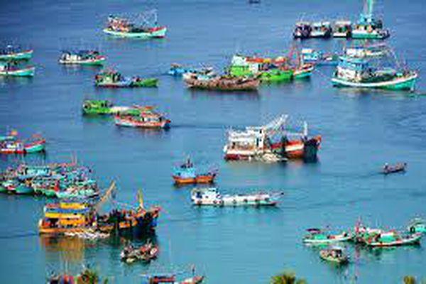 Thực trạng và giải pháp phát triển ngành khai thác thủy sản tỉnh Bình Định