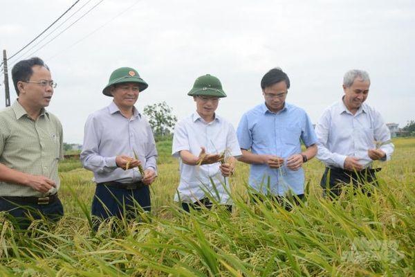 Nam Định: Bám sát diễn biến thời tiết để giành thắng lợi