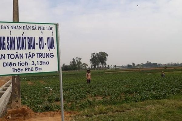 HTX nông nghiệp Phú Lộc 'bà đỡ' cho sản xuất nông nghiệp