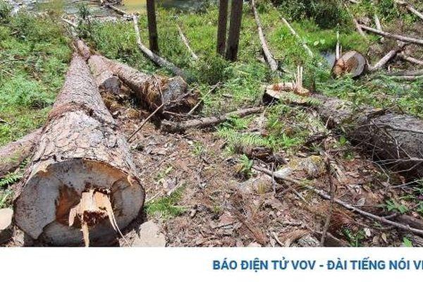 Lâm Đồng kiên quyết thu hồi những dự án để mất rừng