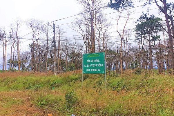 Đắk Nông nói gì về tình trạng phá rừng trên địa bàn?