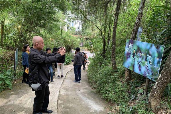Lãng mạn triển lãm ảnh trên cung đường tình yêu Đà Lạt