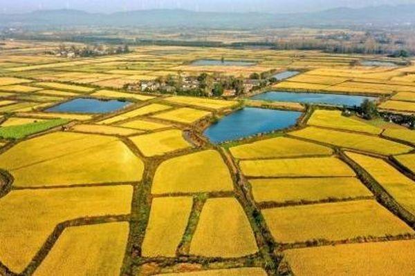 Trung Quốc đặt mục tiêu nâng cấp thêm 1/4 diện tích đất canh tác