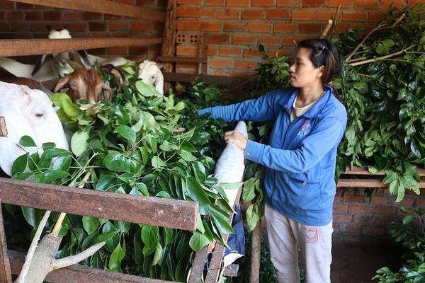 Đắk Lắk: Nỗ lực không để người nghèo bị bỏ lại phía sau