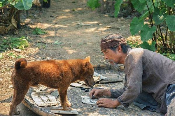 'Cậu Vàng' món quà xuân tuyệt vời, chưa từng có của Điện ảnh Việt Nam
