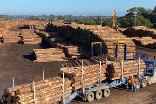 Trung Quốc 'cấm vận' thêm ngành gỗ từ hai bang của Australia