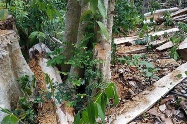 Phá rừng ở Khu bảo tồn thiên nhiên: Bất ngờ tin nhắn