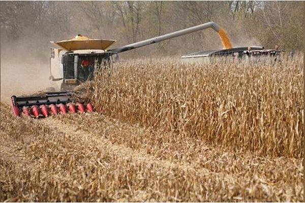 Thị trường nông sản tuần qua: Giá nông sản giao kỳ hạn diễn biến trái chiều
