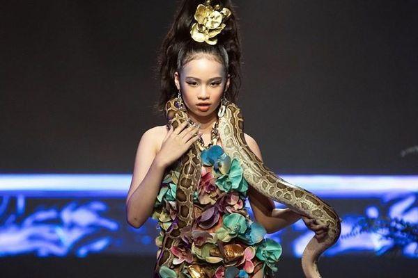 Mẫu nhí trong Lễ hội Thời trang gây ra tranh cãi gay gắt vì vác trăn lên sàn diễn