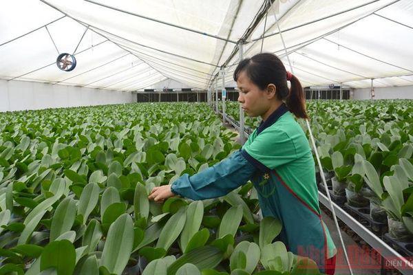 Ngành nông nghiệp Hà Nội vượt khó thành công