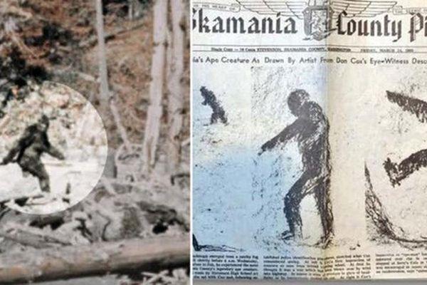 Bất ngờ giả thuyết quái vật Bigfoot con người lùng sùng tìm kiếm