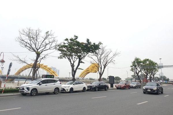 Đà Nẵng: Bài toán khó trong xử lý rác cành nhánh cây xanh đô thị