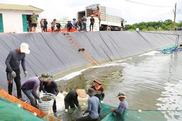 Tiên Yên: Khai thác hiệu quả thế mạnh nuôi trồng thủy sản