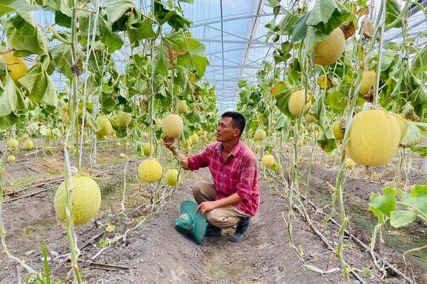 Nhiều HTX nông nghiệp thiếu trụ sở làm việc
