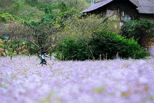 Mộc Châu - dịu dàng những mùa hoa