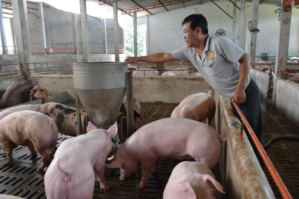 Thịt lợn đang tăng lên từng ngày