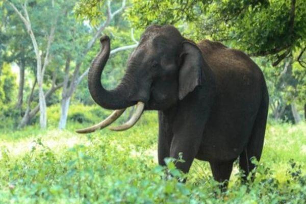 Bị chỉ trích vì bám vào ngà voi để biểu diễn kéo xà