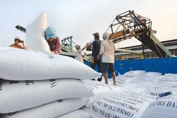Tiến hành chấm điểm uy tín nhà thầu cung cấp gạo dự trữ quốc gia