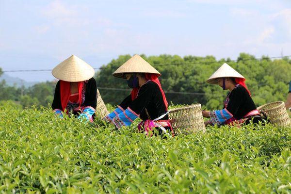 Hải Hà: Tái cơ cấu ngành nông nghiệp