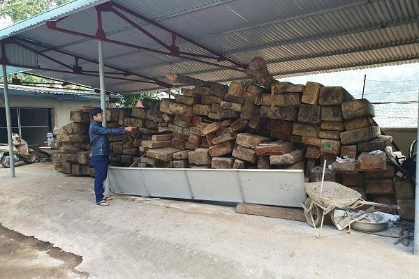 Gỗ quý sắp trở thành củi mục tại Ban quản lý rừng